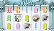 White_buffalo_3