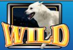 Symbol wild ze hry Wild Huskies online zdarma