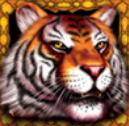 Symbol wild automatu King Tiger zdarma online