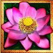 Speciální symbol ze hry automatu Thai Flower