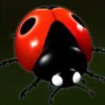 Wild - Wild Berry herní automat online