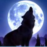 Wolf Moon online automat - wild symbol