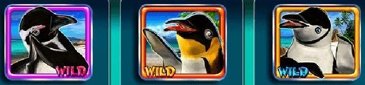 Symboly wild z hracího automatu Penguin Party