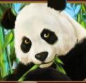 Symbol scatter z hracího automatu Lucky Panda