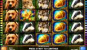 Obrázek ze hry automatu Golden Acorn