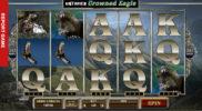 Untamed: Crowned Eagle