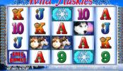 Automat Wild Huskies zdarma online