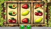 Herní automat Honey Bee online zdarma